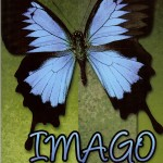 Reading: Imago by Connie Myslik-McFadden
